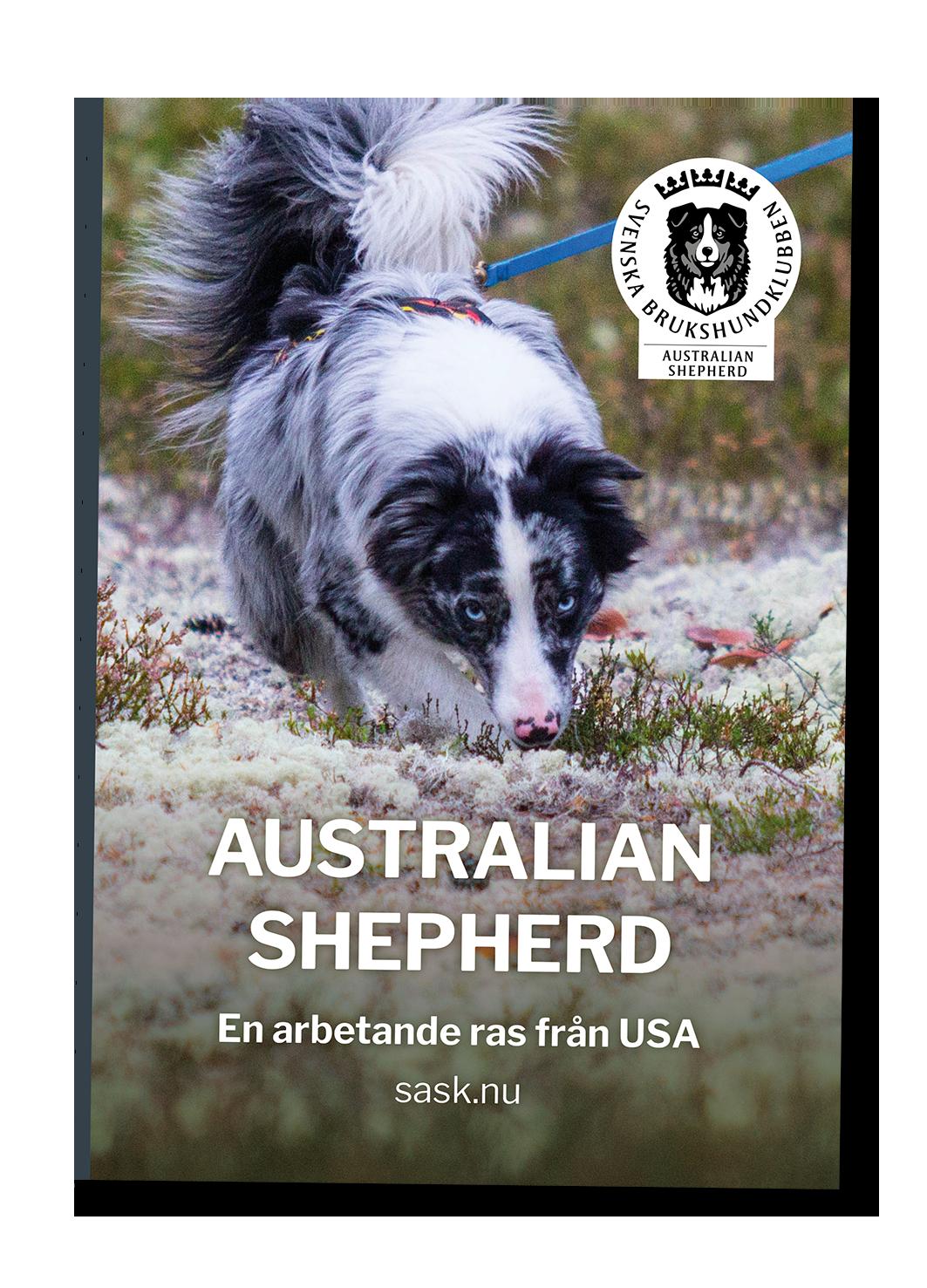 Framsida Infofolder Australian Shepherd