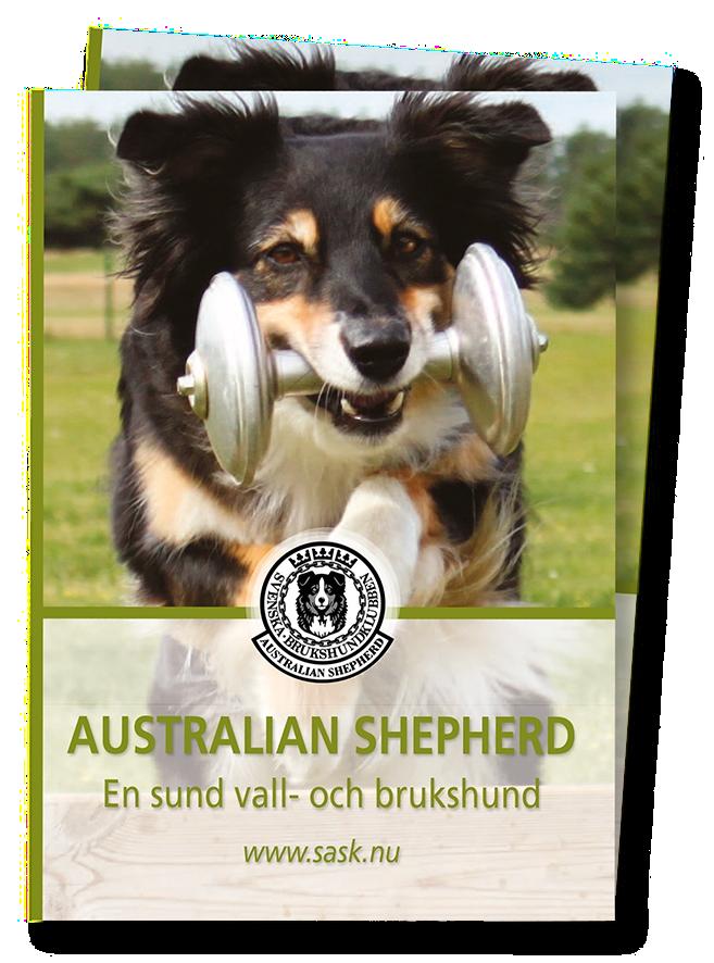Infofolder om australian shepherd som vall- och brukshund