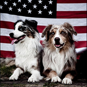 Två aussies framför den amerikanska flaggan