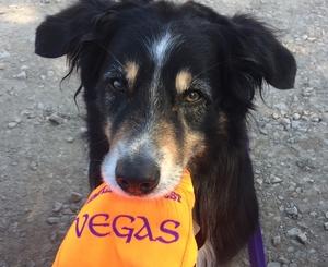 Sugarwind's A True Friend - Vegas